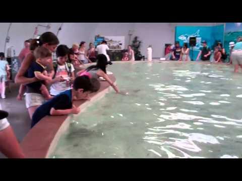 Touching The Sharks @ Stingray Bay Metro Toronto Zoo.