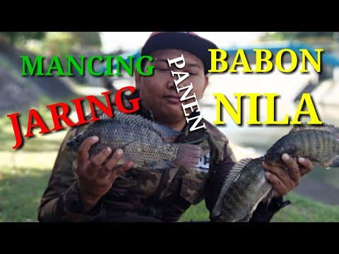 MANCING JARING PART 2 PANEN BABON NILA..!!!