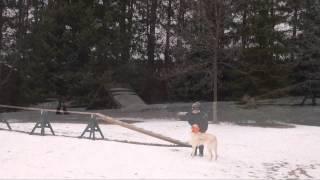 Grace (labrador Retriever) Boot Camp Dog Training (minnesota)