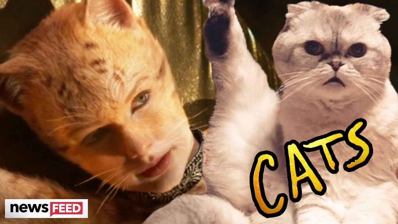 The 'Cats' Movie Will Star Everyone You've Ever Heard of  Here's What You Need to Know