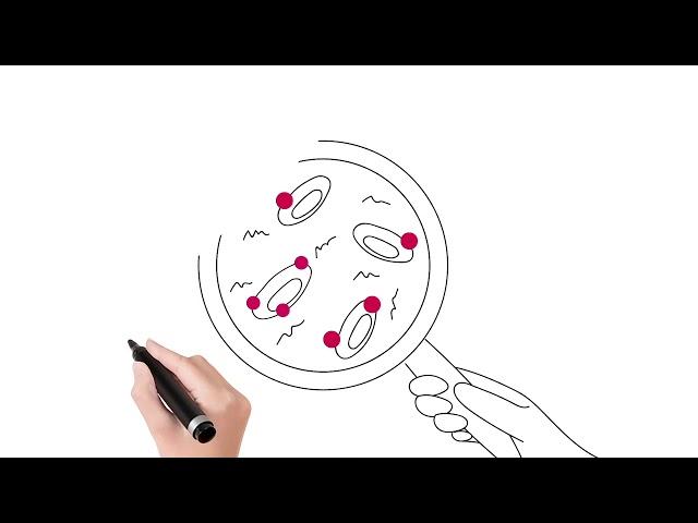 Calydial - le bilan renal