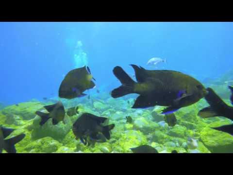 Tenerife Diving 4K 2160p