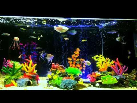 Acuario de peces de agua dulce youtube for Peces de acuario