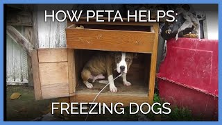 how-peta-helps-freezing-dogs-survive-the-long-harsh-winter