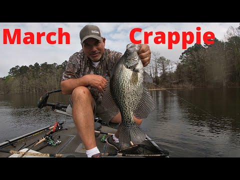 March Crappie Fishing In Louisiana's Toledo Bend Lake (Catching Big Spawning Crappie)