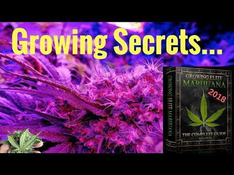 Insider Secrets of How to Grow Weed Indoors - Master Grower Cannabis Grow Bible Review