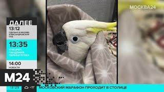 Попугая для видео закутали в плед - Москва 24