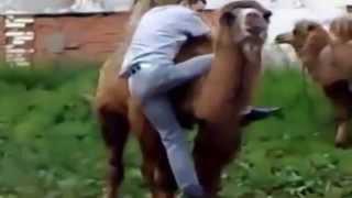 Смешное видео  Кличко убегает от верблюда