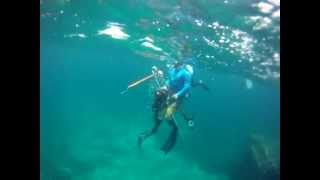 Gambar cover Spearfishing Cartagena Colombia