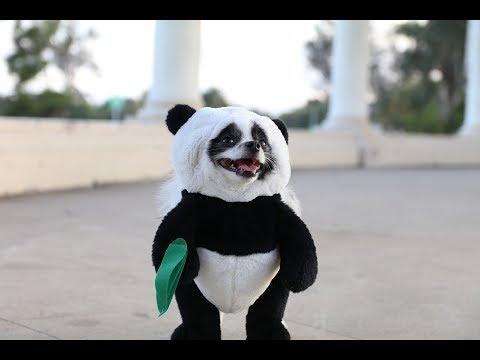 Pandaloon Panda Puppy Dog Costume AS SEEN ON SHARK TANK!