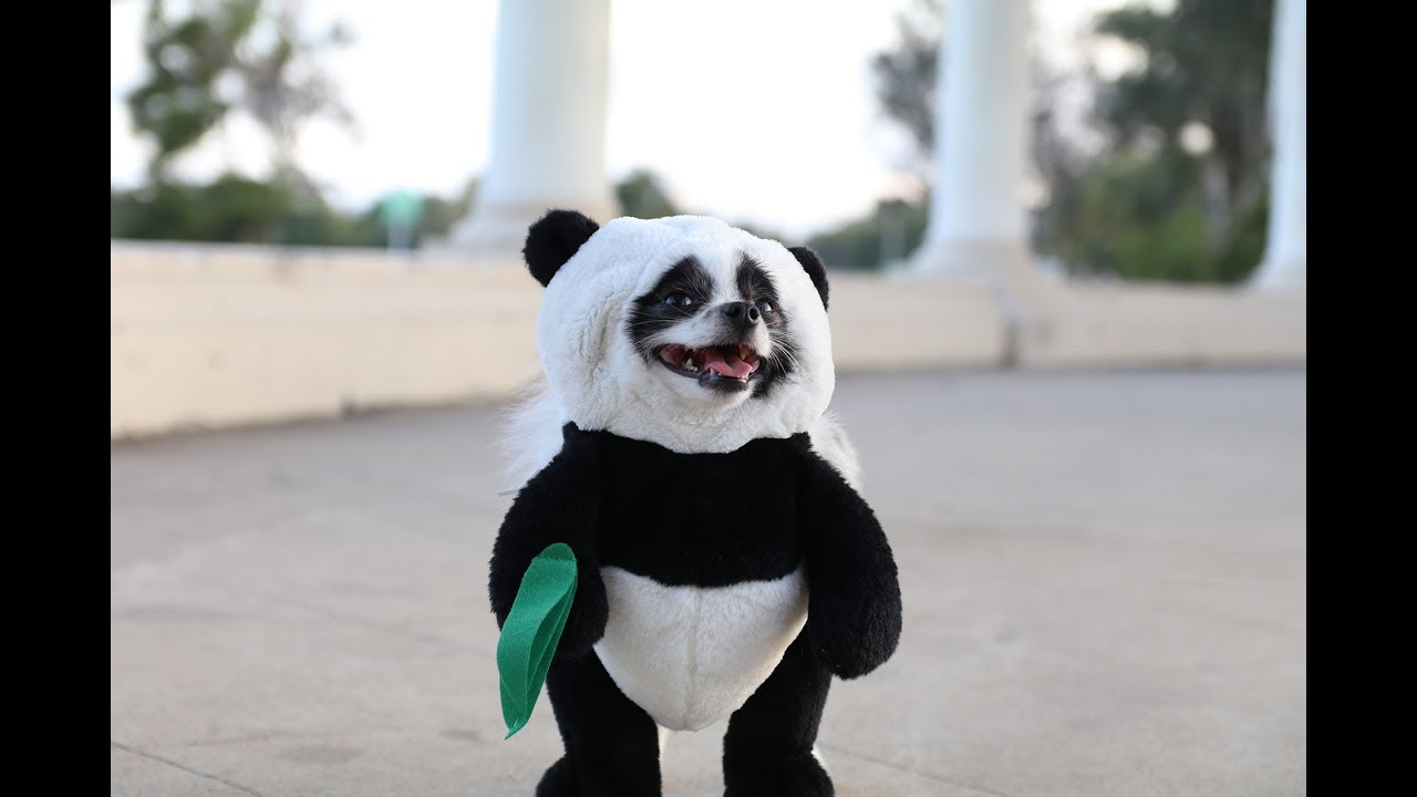 Pandaloon Panda Puppy Dog Costume AS SEEN ON SHARK TANK! & Pandaloon Panda Puppy Dog Costume AS SEEN ON SHARK TANK! - YouTube