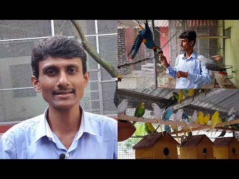 Bird Breeding And Earning Money Tips / How To And With Which Birds Should Start Bird Breeding Tips.