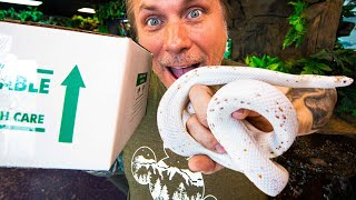 UNBOXING MY DREAM CORNSNAKES!! | BRIAN BARCZYK