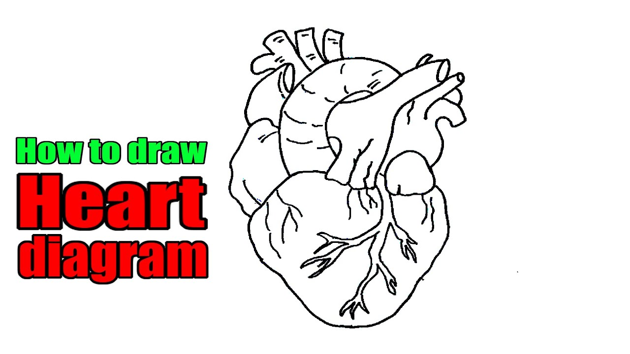 How to draw heart diagram easily | simple diagram of human ...