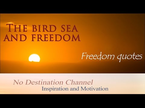 The bird sea and freedom - Freedom quotes