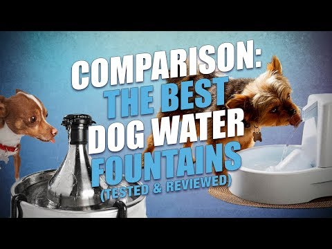 download Top 10 Best Dog Water Fountains of 2018 (Tested and Reviewed)