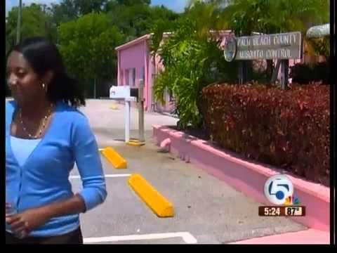 Lovebugs invade South Florida