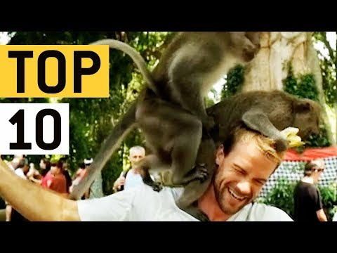 Top 10 Pesky Monkeys Video Compilation || JukinVideo Top Ten