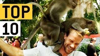 Top 10 Pesky Monkeys Video Compilation || JukinVideo Top Ten