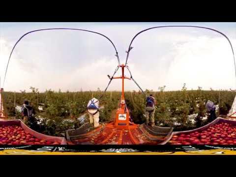 Stemilt Apple Harvest 360VR