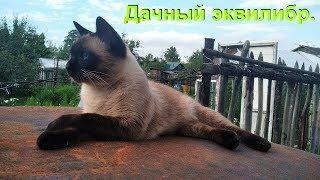 Дача. Кот эквилибрист.