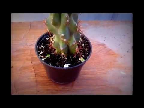 2 tipos de cactus y sus nombres youtube for Cactus tipos y nombres