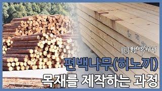 [편백마리] 일본 직수입 편백나무(히노끼) 가공 과정