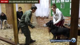 Bodyguard Dog VS Sharp Weapons - Master Dog Training DVD #6