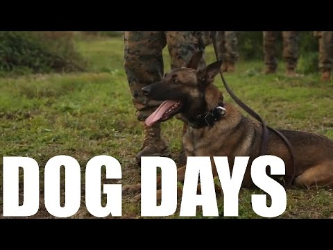 training-with-the-best-|-military-working-dogs