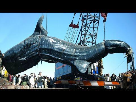Largest Animals Ever Caught