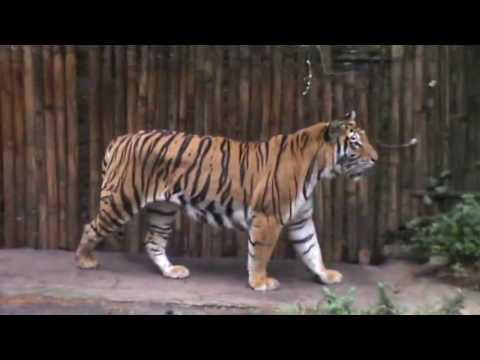 Taman Safari 2 Jawa Timur #Vlog