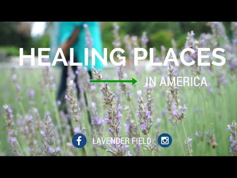 HEALING PLACES IN AMERICA - Lavender Field