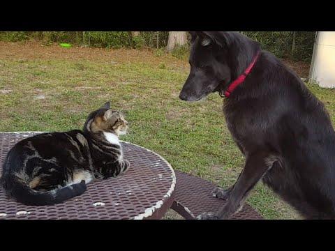 Face Off   Cat VS Dog
