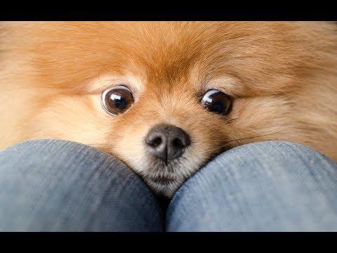 Собаки для квартиры: топ 5 лучшие породы