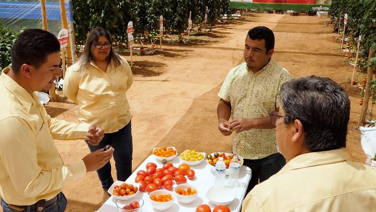 Syngenta pone en operación un invernadero en el C.B.T.a. 146 en  San Quintín Baja California.
