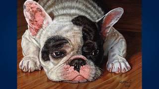 Французский бульдог (French Bulldog)