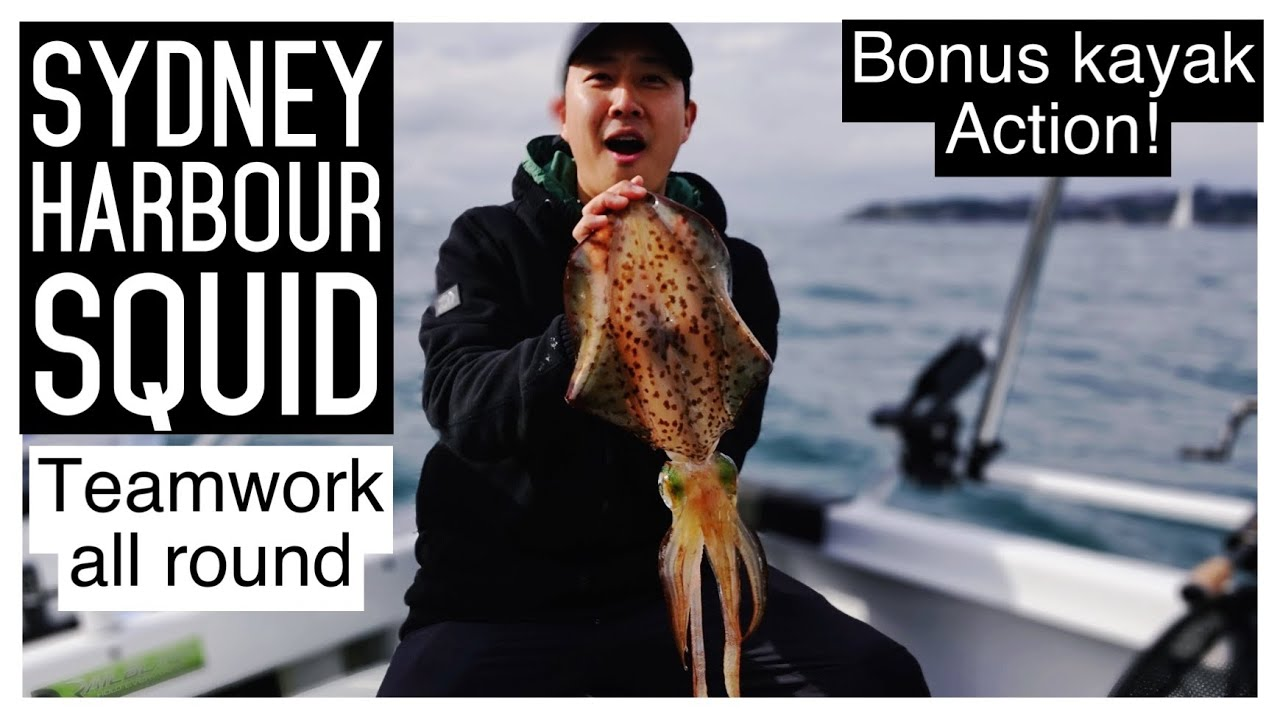 Monster Green Eye Squid - Sydney Harbour Kingfish session [ENG sub]