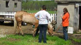 Rescue horse headed for slaughterhouse, humanely euthanized at our farm, Day Dreams Farm