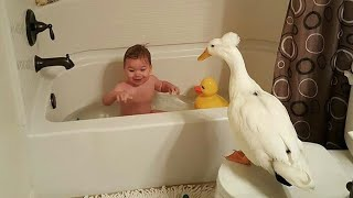 Funny Babies and Duck 😂