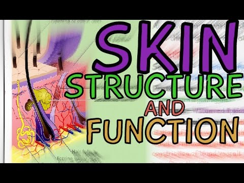 Skin - Structure and Function Explained in 3 Minutes!! Layers: Epidermis, Dermis