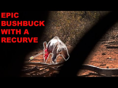 bushbuck-w-a-recurve!-warning-very-graphic-|-bowmar-bowhunting-|