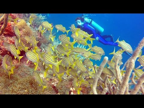 Dive Grenada - Dive Buddies - Romancing The Globe Travel Blog