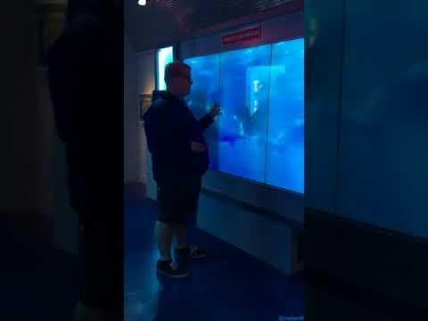 Shark Screen (with audio)/Shark Tank at the International Spy Museum (Funny Prank)