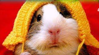 Najśmieszniejsze zwierzęta świata. Śmieszne Filmiki. Kompilacja HD.