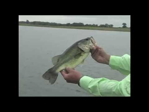 Busting Top Water Bass on a Ribbit Frog