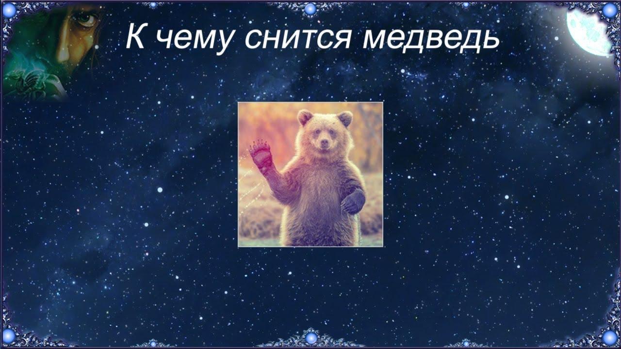 Сонник фрейда медведь, как и большинство диких зверей, символизирует собой половой акт.