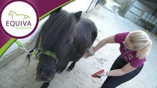 Pferde putzen - Fellpflege im Fellwechsel