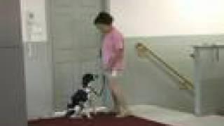 Dog Training Elkton Maryland And Newark Bear Delaware