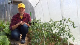 Грядка термос для томатов