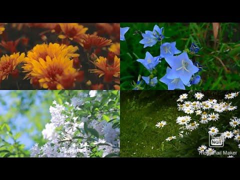 Beautiful Flowers All Around The World